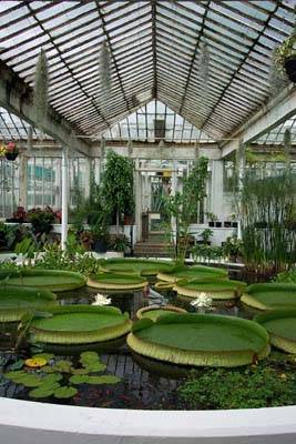 The Victoria Waterlily House 2