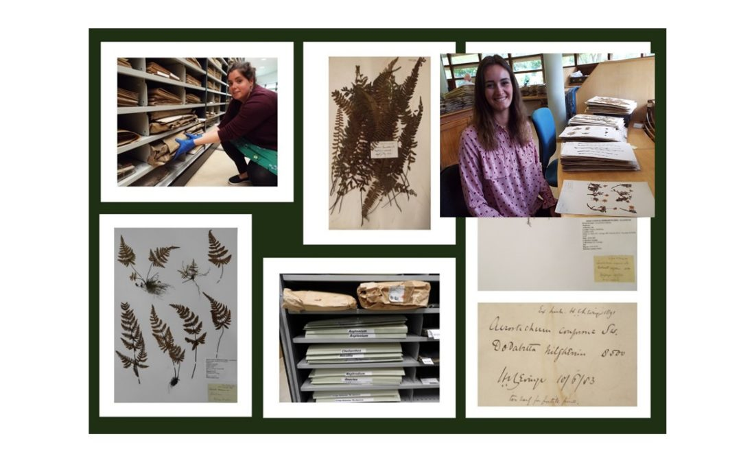 Levinge lost treasures – plant specimens which have survived fire and lay undocumented at Irelands National Herbarium