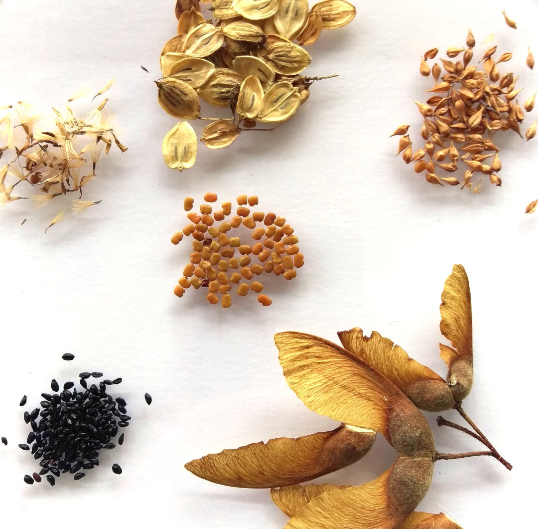 selection of seeds national herbarium