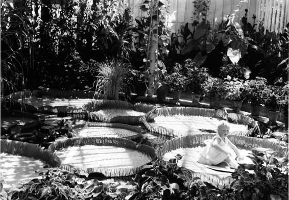 child sitting on a lilly pad 1920s