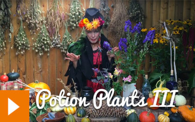 Magical Plants in the Witches' Garden: Potion Plants III