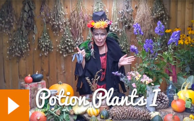 Magical Plants in the Witches' Garden: Potion Plants I