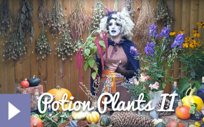 Magical Plants in the Witches' Garden: Potion Plants II