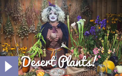 Magical Plants in the Witches' Garden: Desert Plants