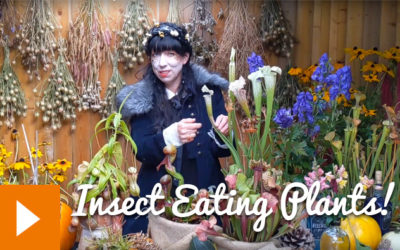 Magical Plants in the Witches' Garden: Insect Eating Plants!