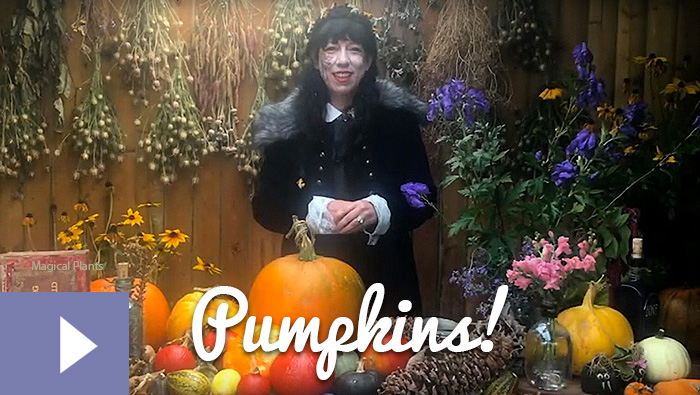 Magical Plants in the Witches' Garden: Pumpkins!