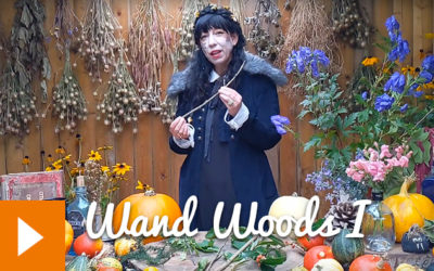 Magical Plants in the Witches' Garden: Wand Woods I