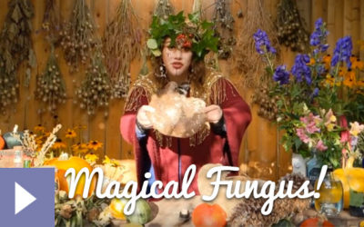 Magical Plants in the Witches' Garden: Magical Fungus