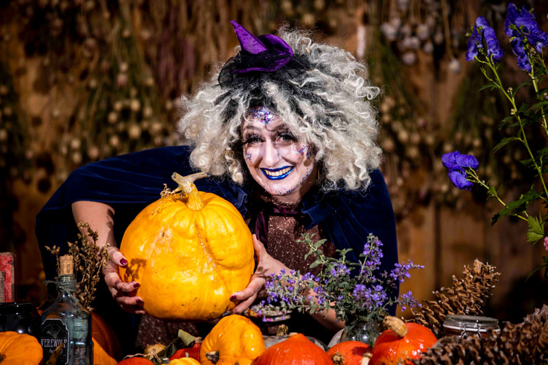 wicked witch in the botanic gardens glasnevin