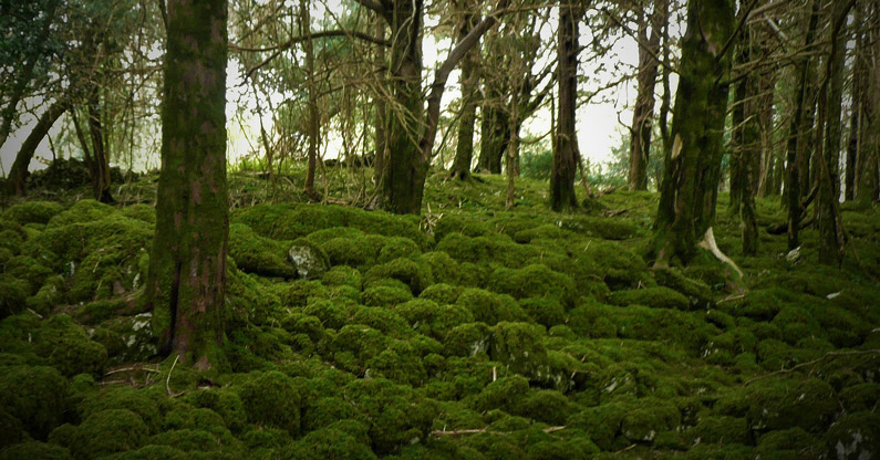 yew wood and mosses