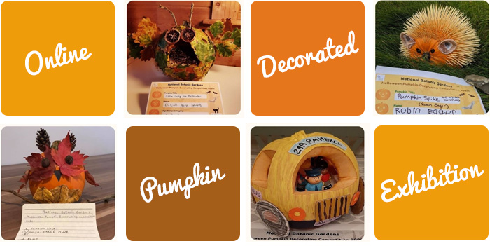 online decorated pumpkin competition