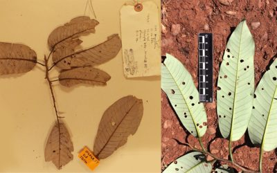 Herbarium-based research on plant physiological responses to climate change