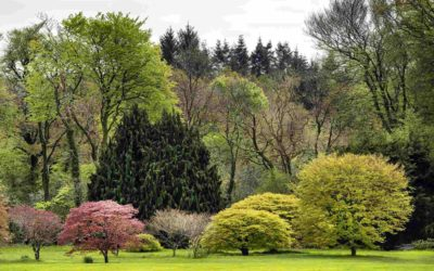 John F Kennedy Arboretum – Mapping the Forest Research Plots