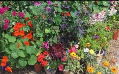 Gardening Shorts from the Children's Garden: Sow Calendula Seeds for National Plant a Flower Day