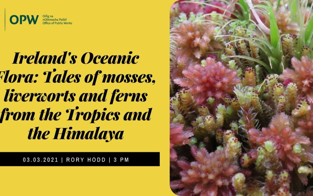 Ireland's Oceanic Flora: Tales of mosses, liverworts and ferns from the Tropics and the Himalaya – online talk with Rory Hodd