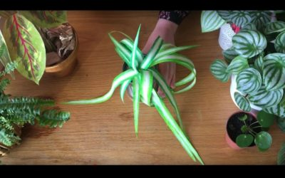 Paper Plants: How to make a paper spider plant