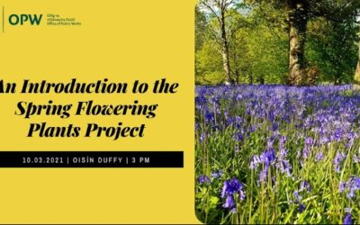 An Introduction to the Spring Flowering Plants Project – online talk with Oisín Duffy