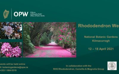 Launch of Rhododendron Week 2021 at National Botanic Gardens of Ireland, Kilmacurragh